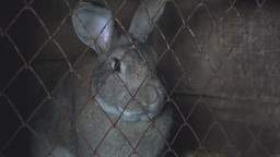 Big rabbit sits in a cage Stock Video Footage