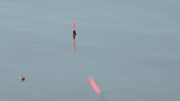 Fishing Float on the water Stock Video Footage