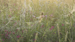 Morning meadow with wet spider webs on grass Stock Video Footage