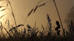 Wet grass early in the morning on a meadow Stock Video Footage