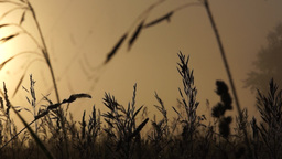 Wet grass early in the morning on a meadow Footage