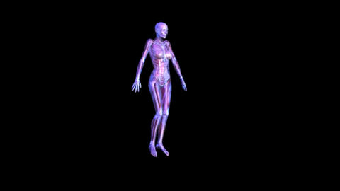 Anatomy Stock Video Footage