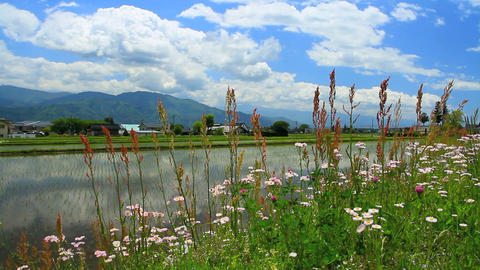 Rice Plantation In Nagano Prefecture, Japan stock footage