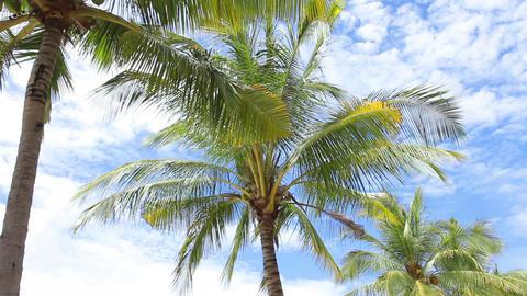 Palm Trees on the blue sky Footage