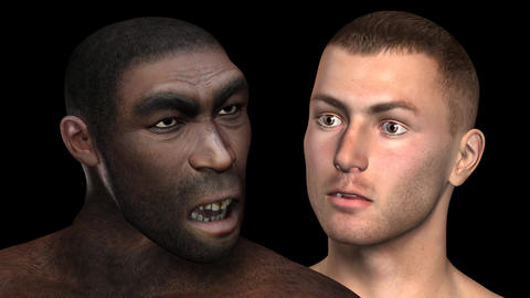 Homo Erectus Animation stock footage