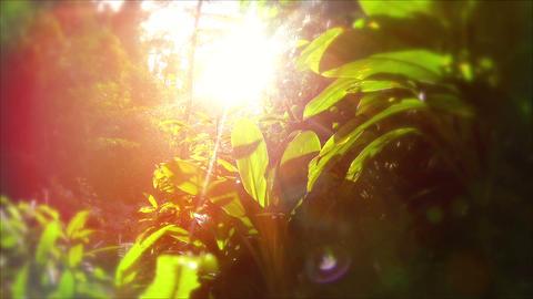 Lush Greenery Footage