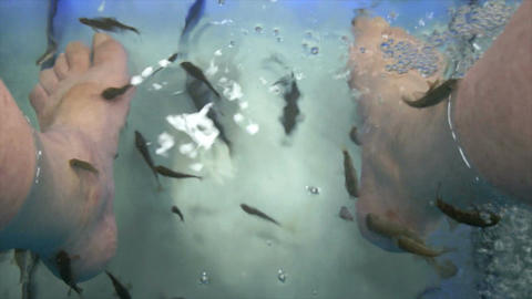 Fish Spa stock footage