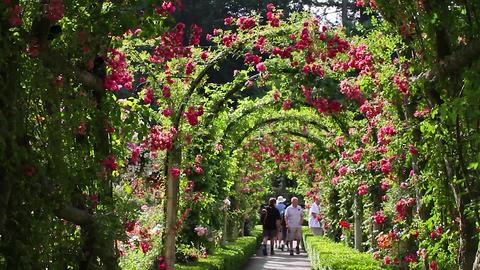 Butchart Garden - Rose Garden stock footage
