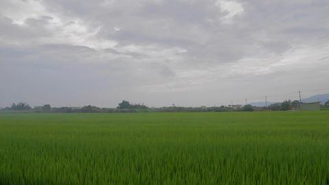 dancing grass in Yilan - medium Footage