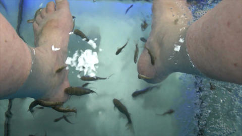 fish spa Stock Video Footage