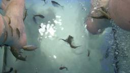 limestone rocks Stock Video Footage