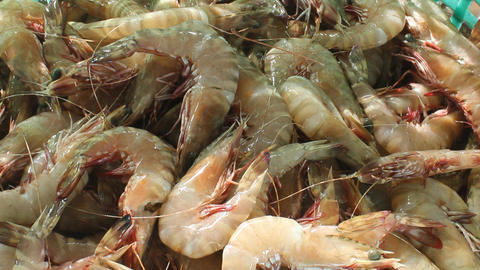 Giant tiger prawns in the fish market Live Action