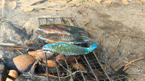 Grilling parrotfishes in the way of local food Stock Video Footage