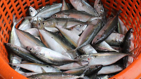 Smooth tailed trevally at Phuket fish market Stock Video Footage