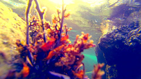 Underwater close up shot. Seaweed dancing in waves Stock Video Footage