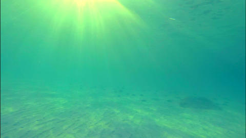 Swimming by the sandy seabed in turquoise waters Footage