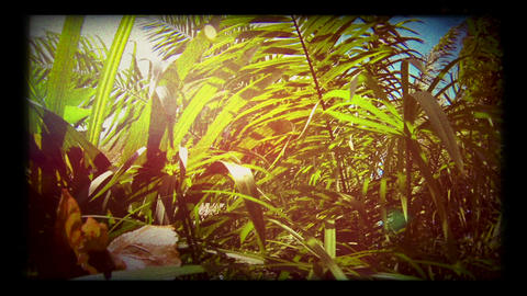 Dreamy retro look palm leaves background Footage