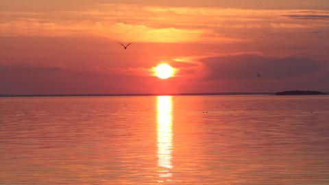evening sea sunset in the wild nature with seagull Footage