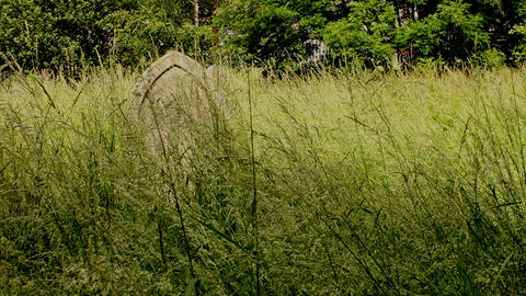 Pan of a meadow overgrown tall grass with scattere Footage