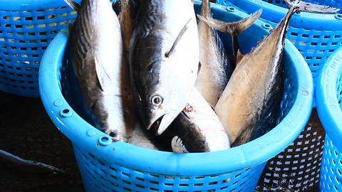 Fresh Fishes Form Andaman Sea Footage