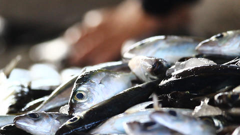 Fresh Fishes Form Andaman Sea Stock Video Footage