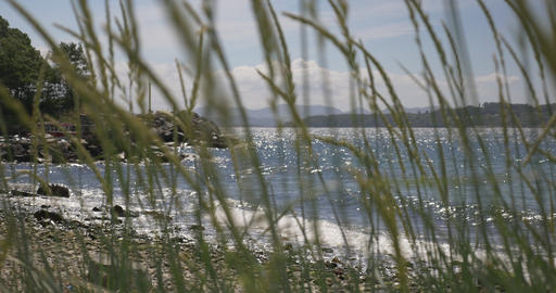 4K, Norway, Seaview through weed Stock Video Footage