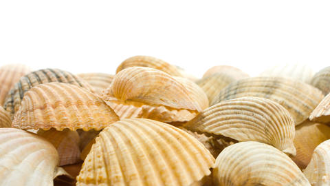 Sea shells nature motion background Footage