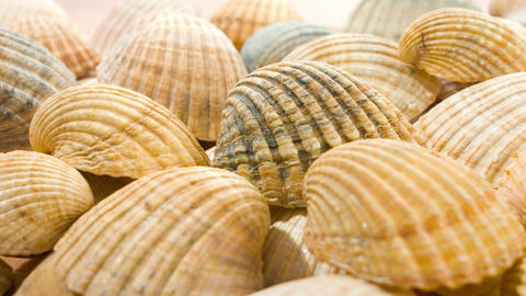 Sea shells Stock Video Footage
