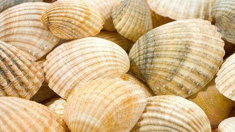 Seashells background Footage