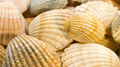Seashells motion background Footage