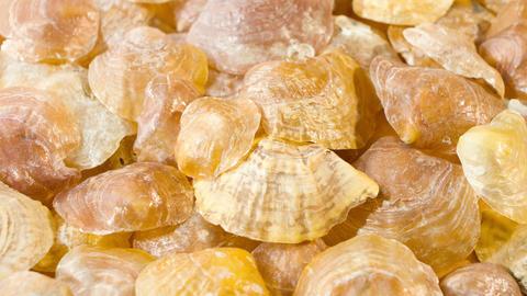 Seashells background Stock Video Footage