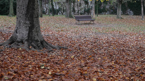 Autumnal leaves and bench Footage