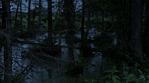 Swamp In The Forest At Night stock footage