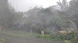Typhoon causing strong wind and rain, blowing tree Footage
