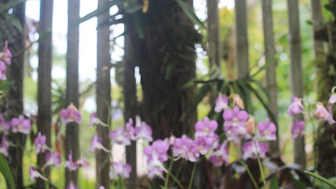 orchid farm Stock Video Footage