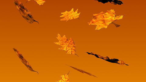 Autumn Leaves Falling Stock Video Footage