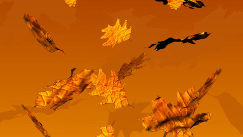 Autumn Leaves Falling stock footage