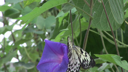 Butterfly Landing on Flower Footage