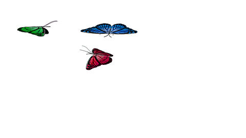 BUTTERFLY ANIMATION 4 Stock Video Footage