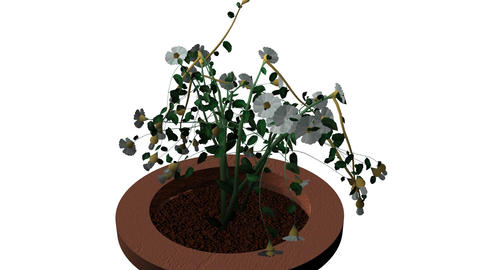 Garden Plant Growing In A Pot stock footage