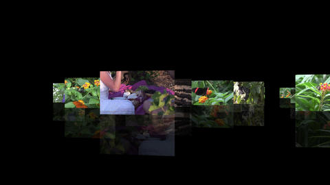 NATURE SERIES SEAMLESS Stock Video Footage