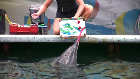 drawing dolphin Footage