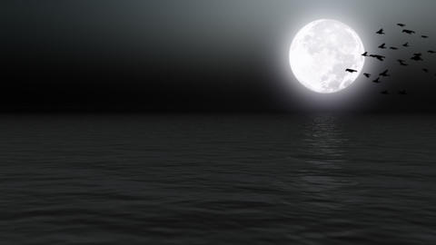 Birds flying over calm sea with moon - Nature - Night - Backgrounds Animation