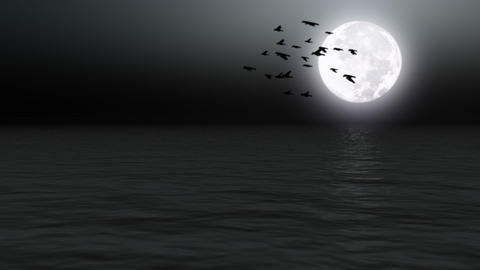 Birds flying over calm sea with moon - Nature - Night -... Stock Video Footage