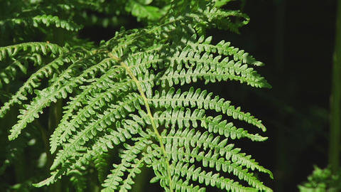 Ferns Footage