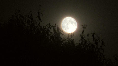 moon behind trees time lapse Stock Video Footage
