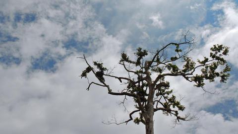 crazy clouds over tree time lapse Stock Video Footage