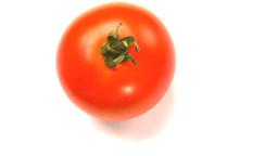 tomato 2 Footage