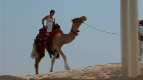 riding a camel Footage