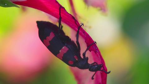 Beetle Footage